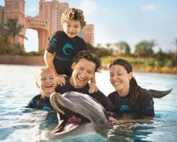 Dolphin Covve